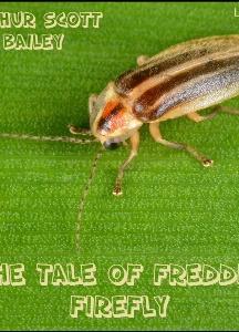 Tale of Freddie Firefly